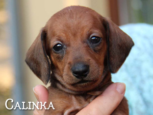 Calinka