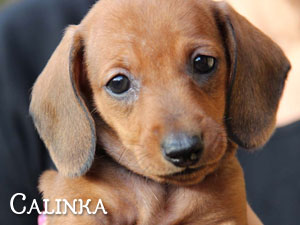 CALINKA (reserved)