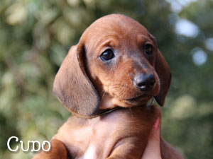 CUDO (reserved)