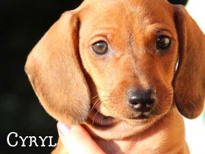 Cyryl