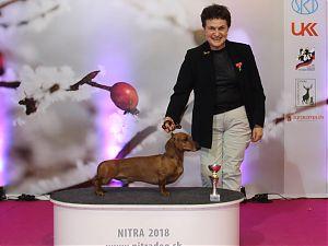 Nitra show
